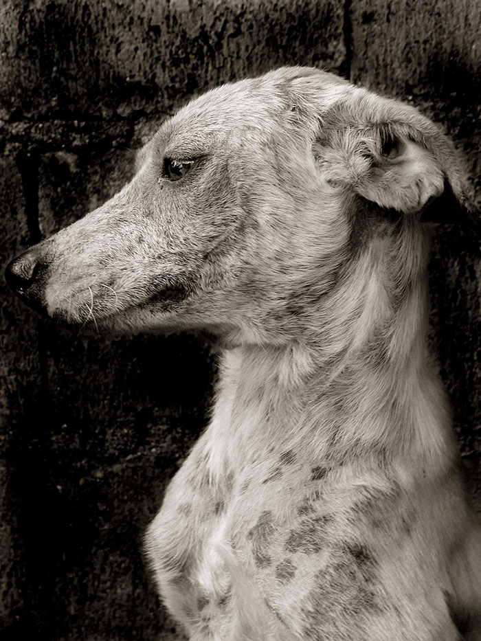 Celebrated-Authors-Animal-Portraits-Speak-to-Your-Heart10__700