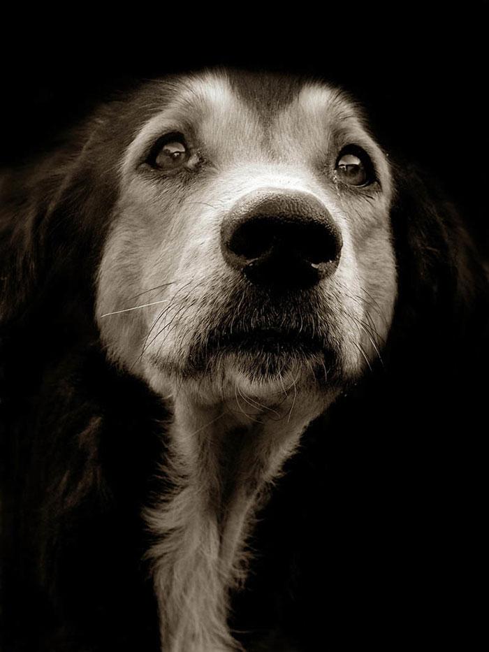 Celebrated-Authors-Animal-Portraits-Speak-to-Your-Heart13__700