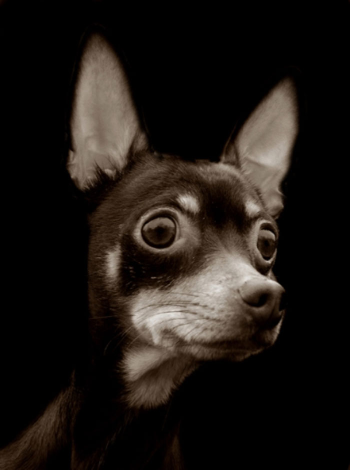 Celebrated-Authors-Animal-Portraits-Speak-to-Your-Heart14__700
