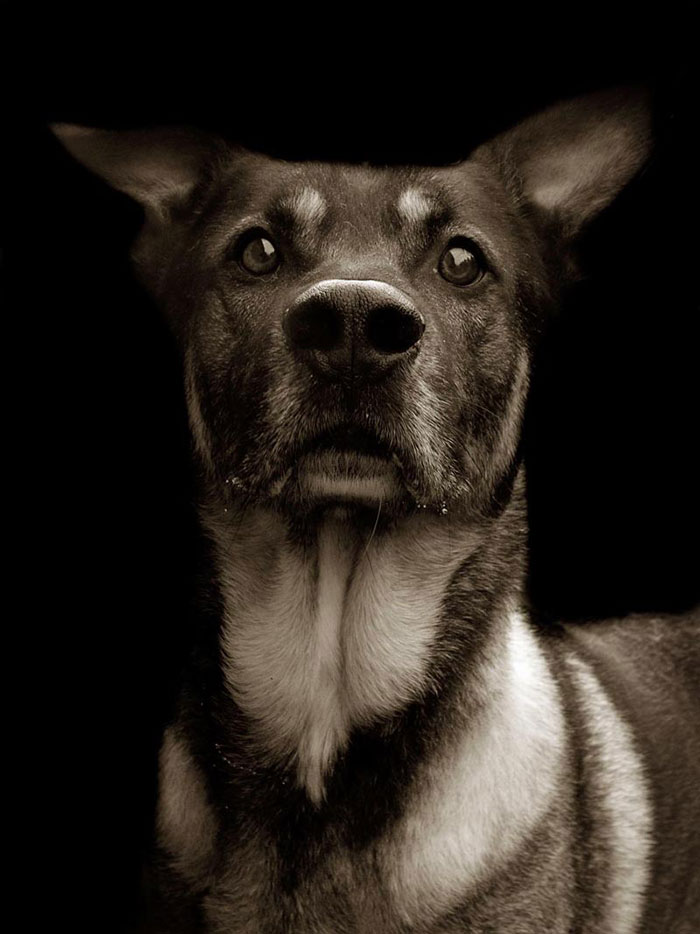 Celebrated-Authors-Animal-Portraits-Speak-to-Your-Heart7__700