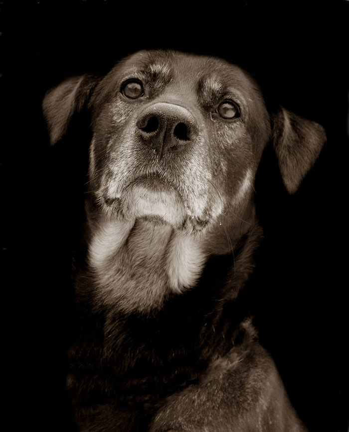 Celebrated-Authors-Animal-Portraits-Speak-to-Your-Heart8__700