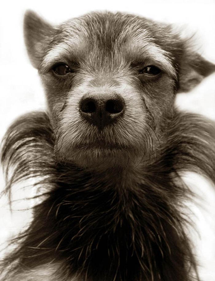 Celebrated-Authors-Animal-Portraits-Speak-to-Your-Heart9__700