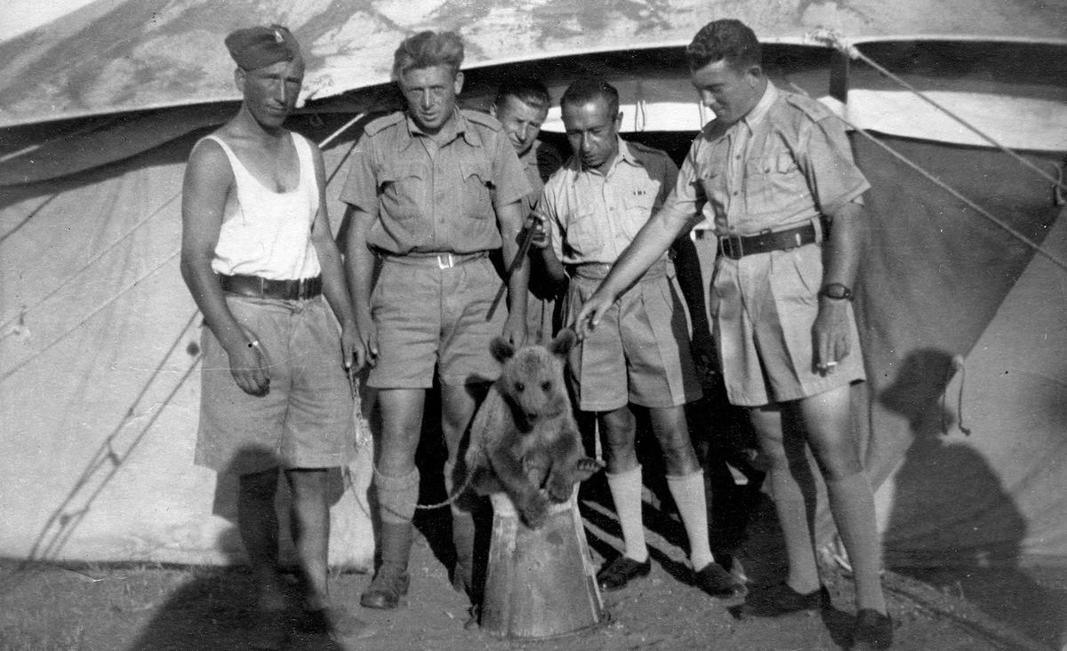 Невероятната история на Войтек – мечето войник