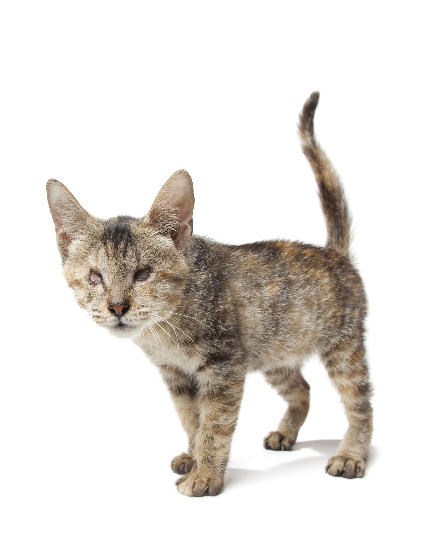Bali-Rescue-Kitten-born-without-eyes1__880