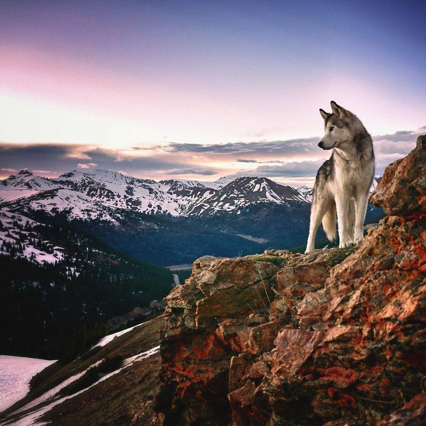 Loki-the-Wolfdog7__880