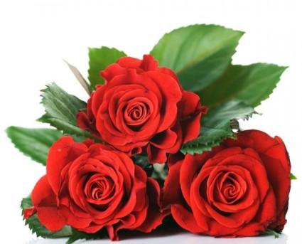 bright_roses_