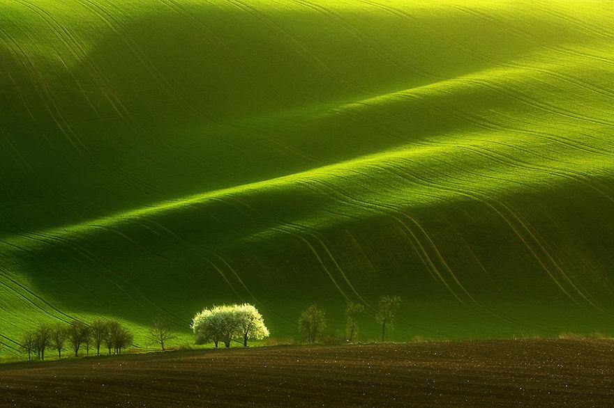 drzewkobiale-900__880