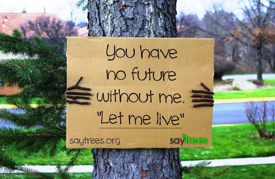 Чуйте ги: Тихият протест на дърветата
