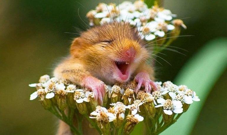 Снимки на щастливи животни, които ще ви накарат да се усмихнете