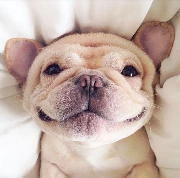 smiling-animals-47-570e0c7e1a691__605