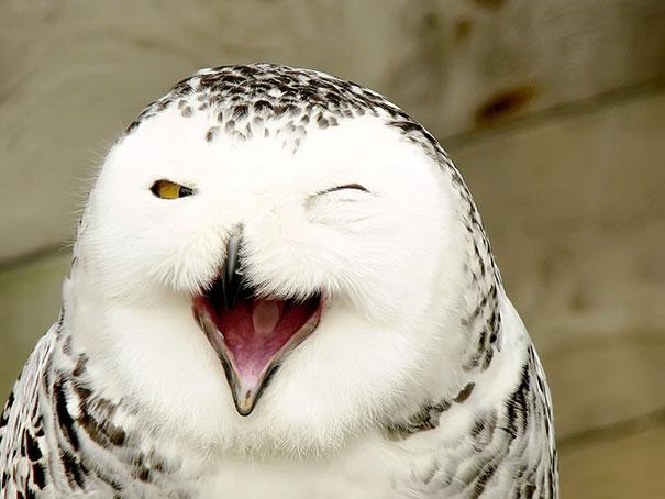 smiling-animals-6-570e0c171eee1__605