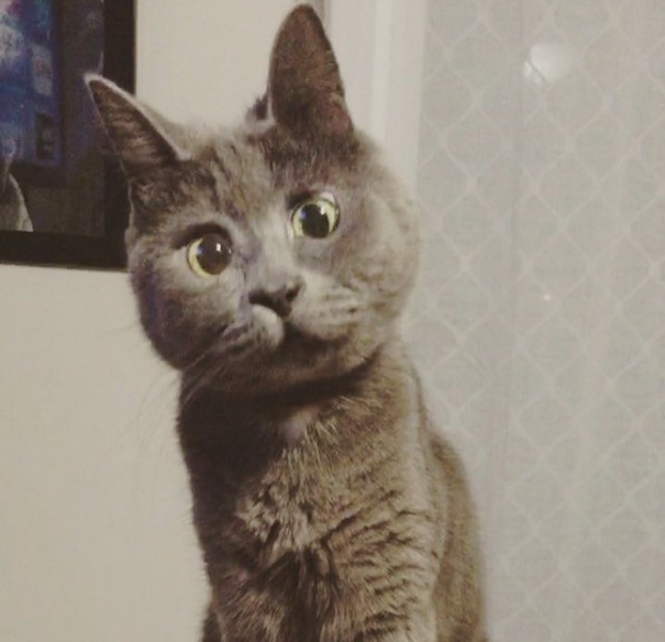 surprised-cat-hydrocephalus-kevin-theadventuresofkev30