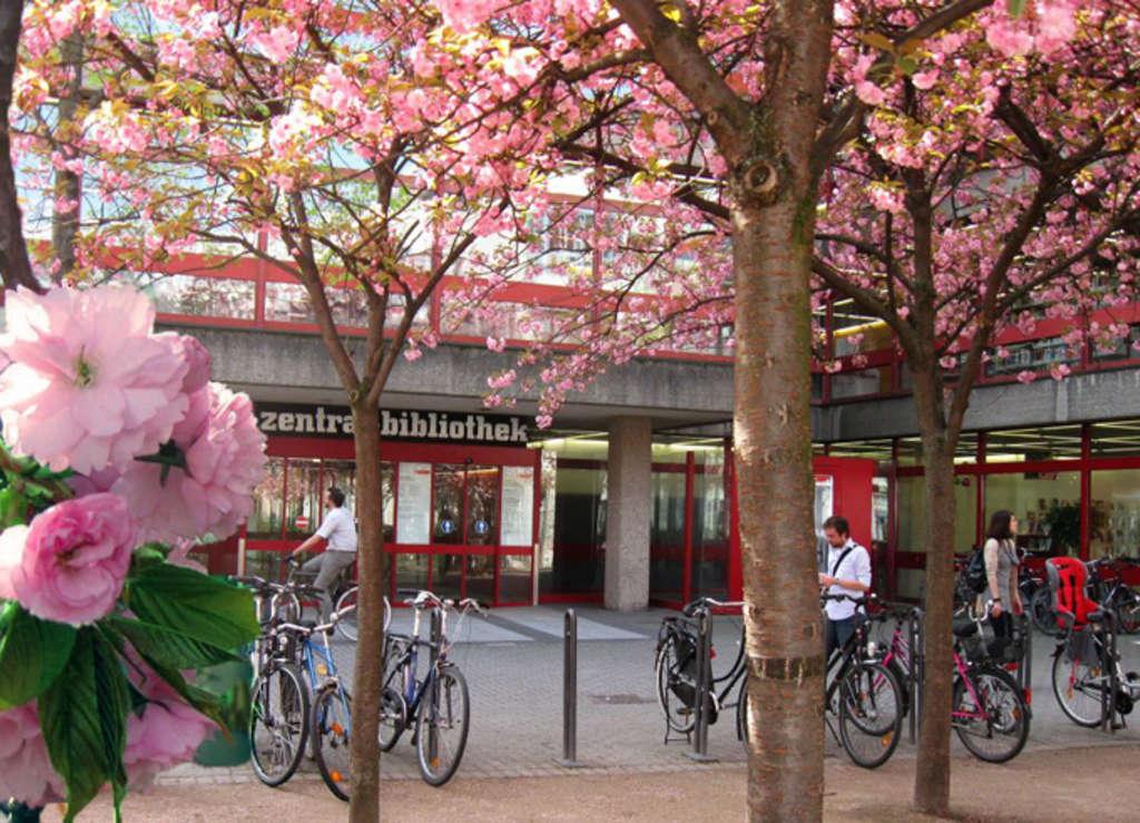 Kirschblüte vor der Zentralbibliothek