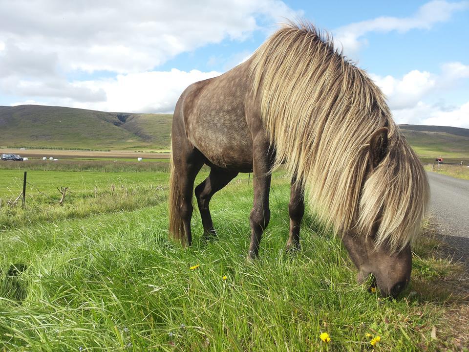 исландия кон