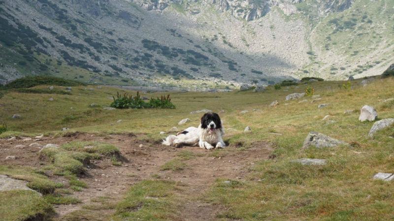 куче Рила 8