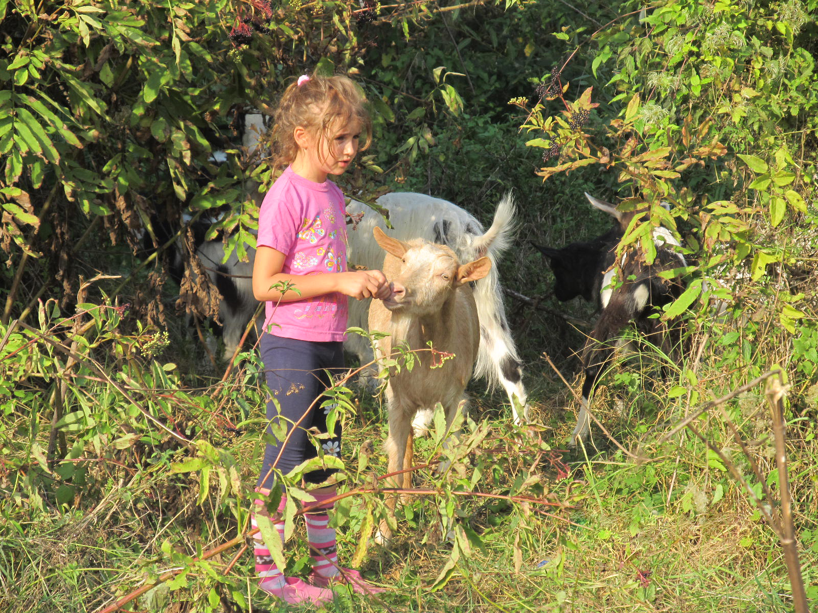 Скритите съкровища на България: Малката Ивана-Мария