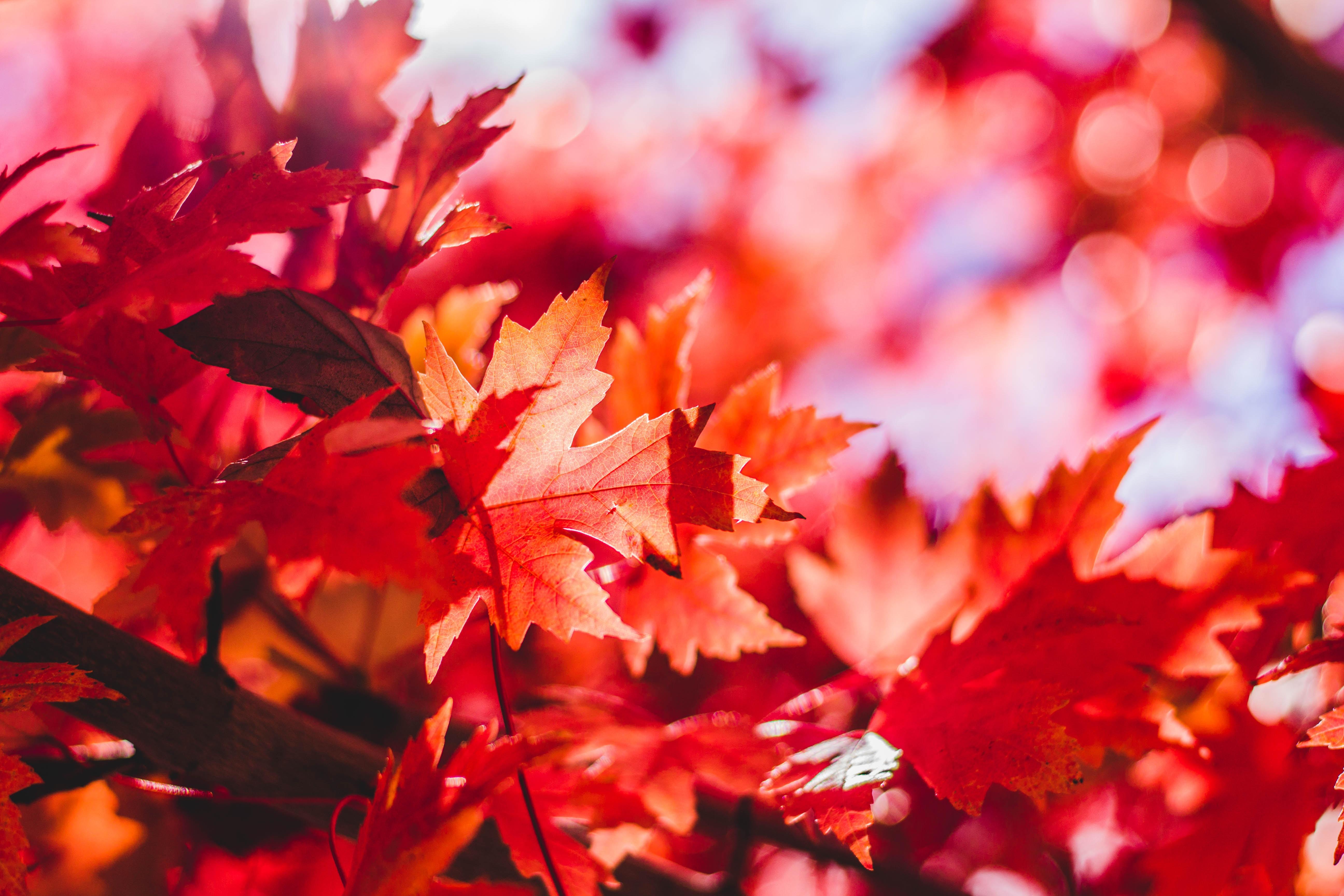 Септември – с дъх на есен и обичане