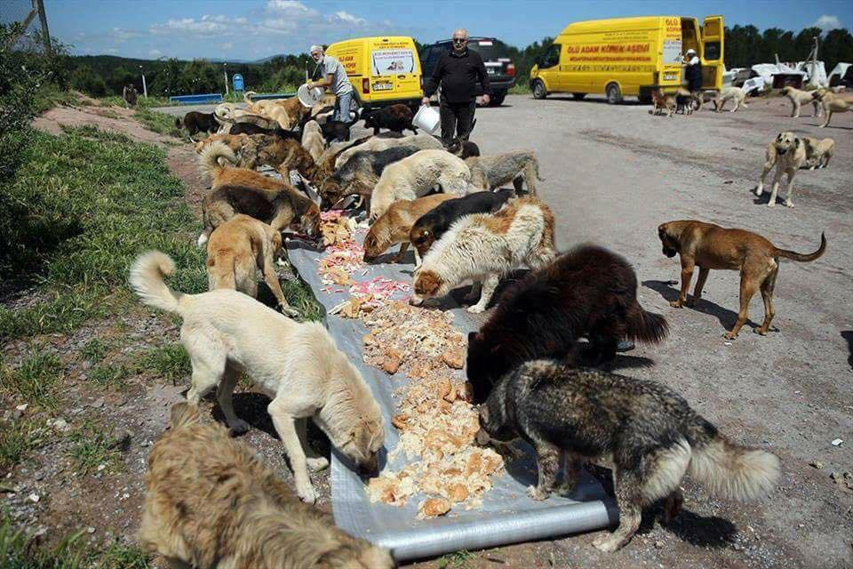 Бизнесмен храни над 2000 бездомни кучета всеки ден