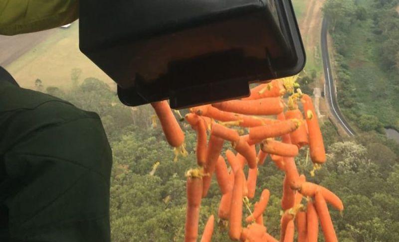 """Тонове храна """"заваляха"""" от хеликоптери за пострадалите животни в Австралия"""