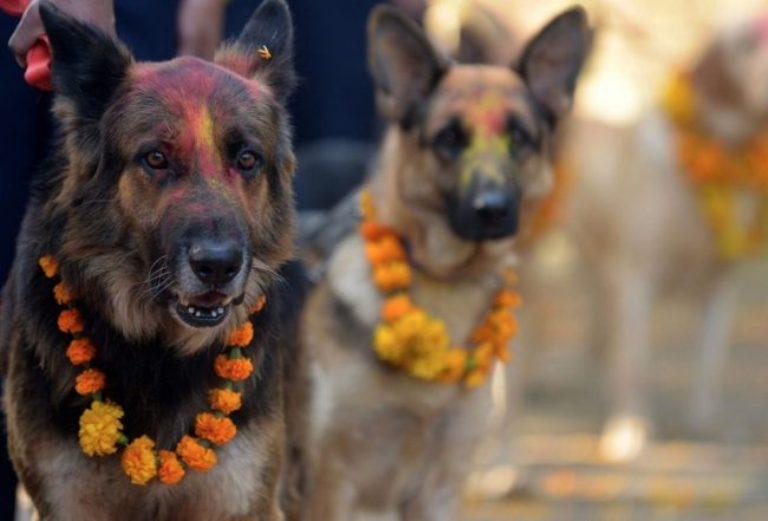 Фестивал в Непал благодари на кучетата, че са наши приятели