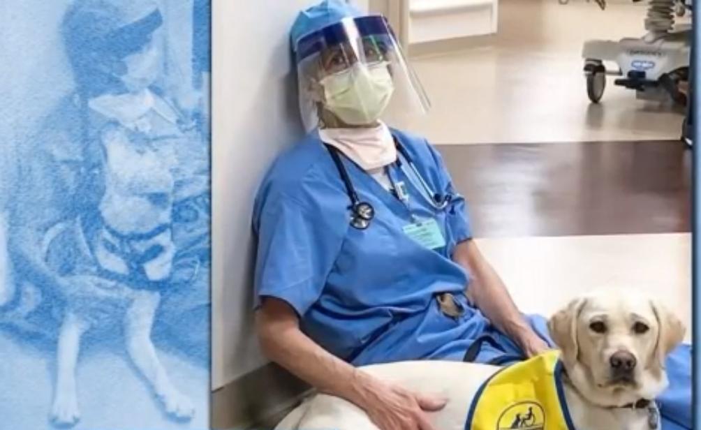 Куче подкрепя лекарския персонал по време на пандемията