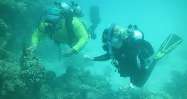 корали Австралия