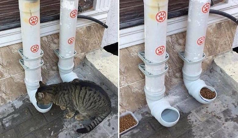 Хранилките за бездомни животни в България