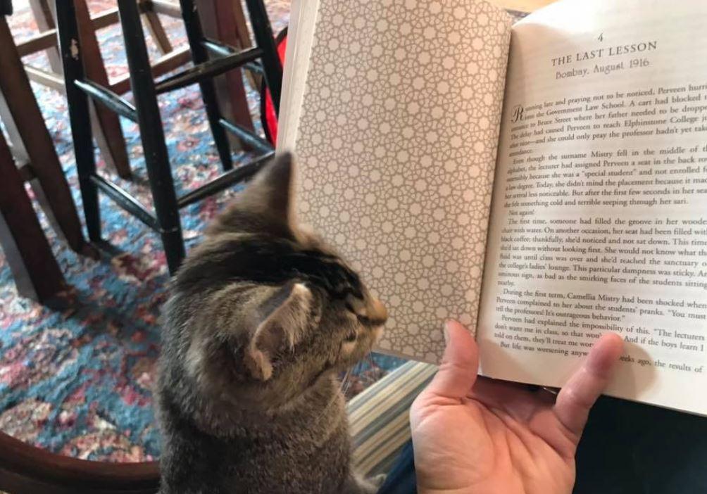 Котешката книжарница – най-пухкавото място за любителите на книги