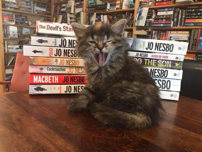 котешка книжарница