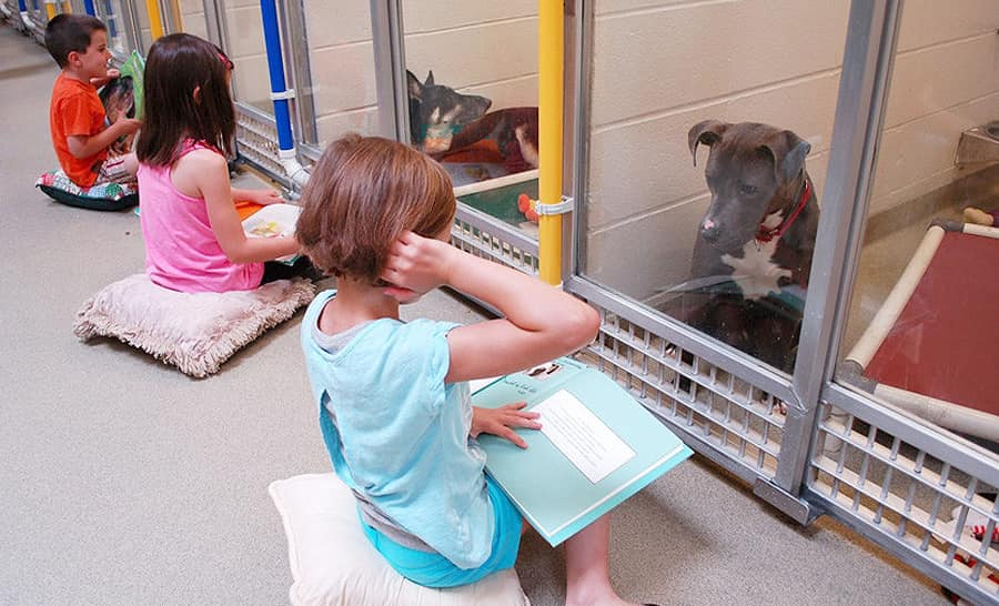 Деца четат приказки на бездомни кучета