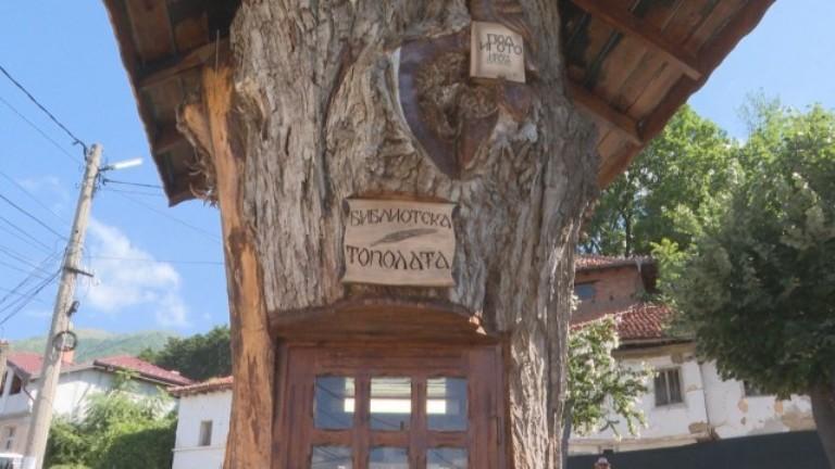 300-годишна топола в Сопот стана библиотека