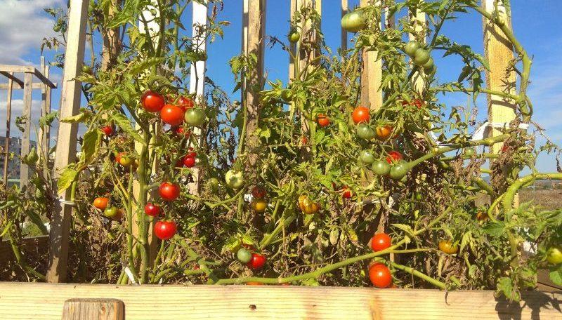 Градина за градско земеделие О'беля