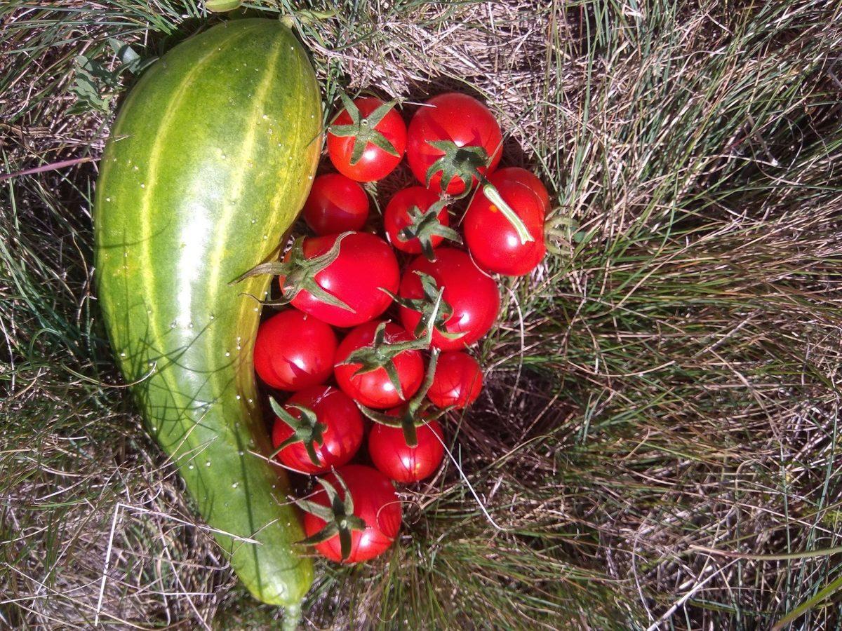 Споделяме чиста храна и чисти взаимоотношения в Градина за градско земеделие О'беля
