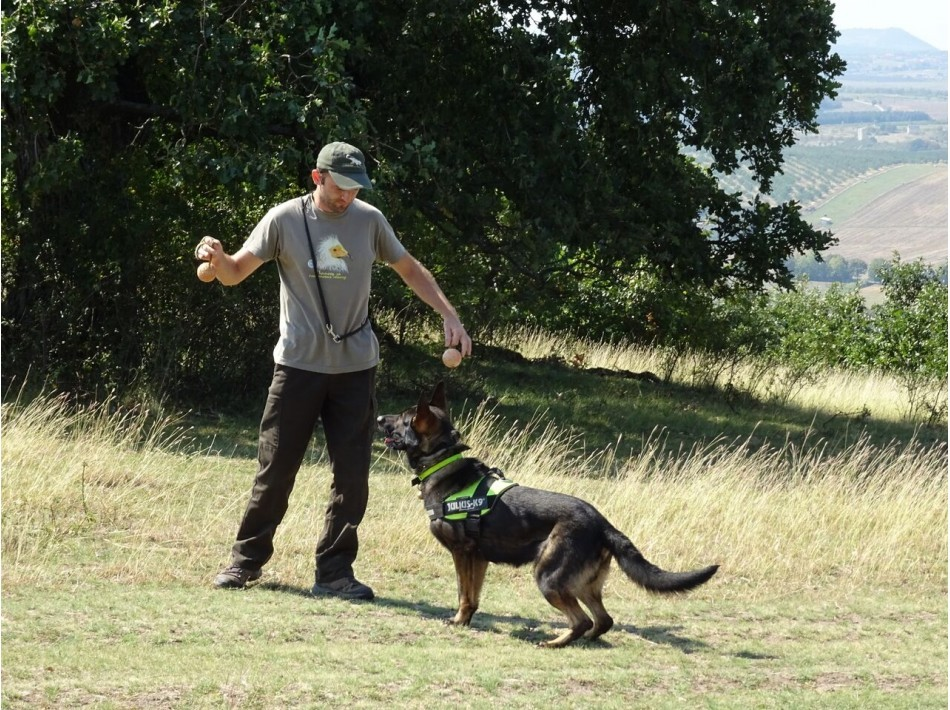 Кучето Барс – четириногият борец с отровите в природата